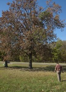 tips for watering trees- https://www.jandnfeedandseed.com