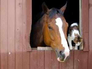 keeping horses cool in summer- https://www.jandnfeedandseed.com