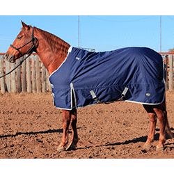 cactus horse blankets