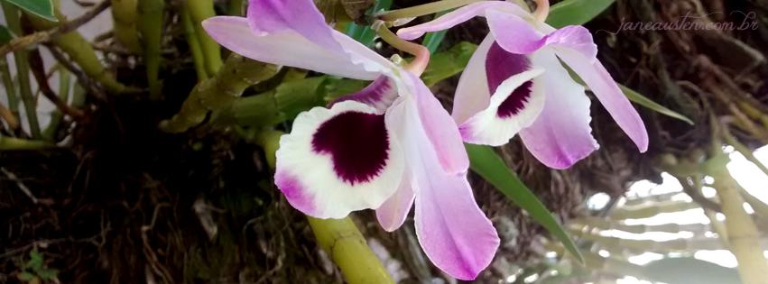 Minhas orquídeas