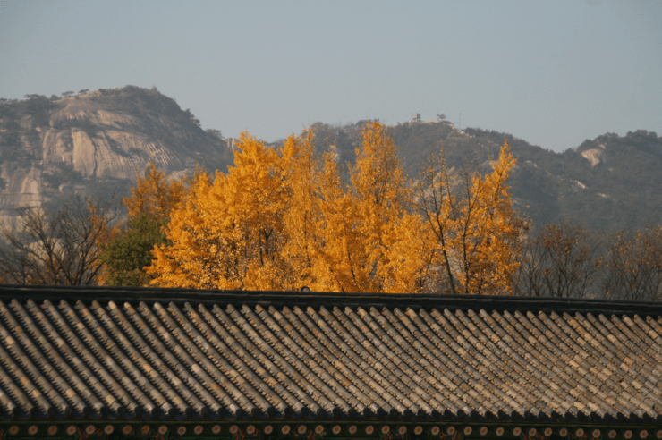 autumn in seoul korea gyeongbokgung 2