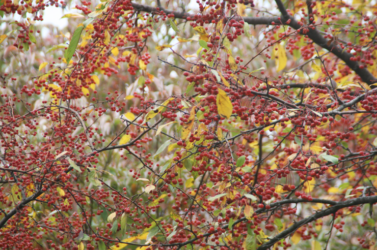 fall foliage korea seoul 5