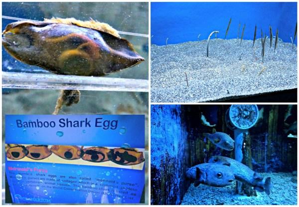 manila-ocean-park-09
