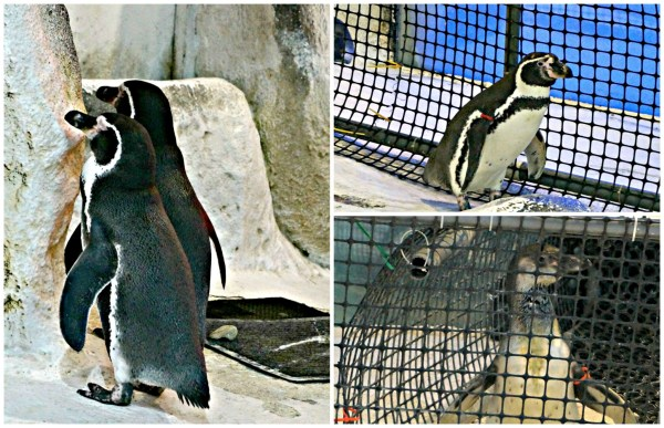 manila-ocean-park-jelly-fish-penguin-encounter