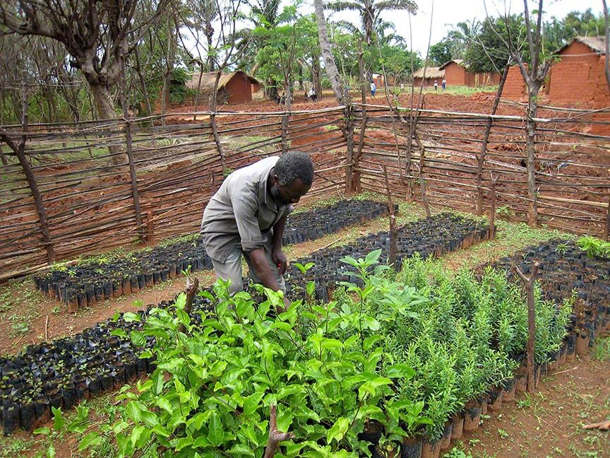 TACARE village nursery attendant Yahya Hamza  attends to his passion fruit and Komamanga plants. 2006