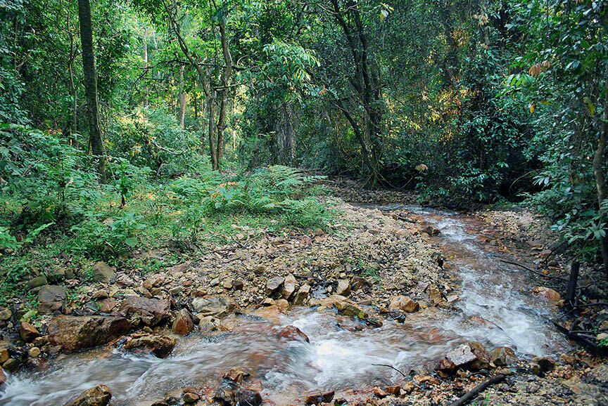 A stream in Gombe National Park