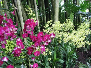 Pink and pale yellow orchids