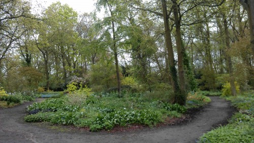Overall view of woodland (Beth Chatto)