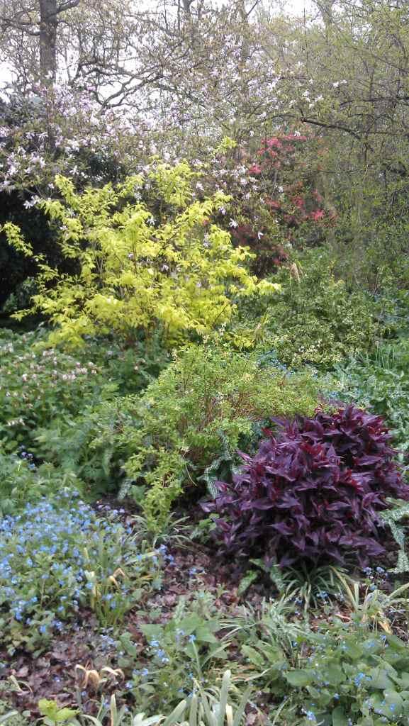 persicarias and lemon coloured shrub