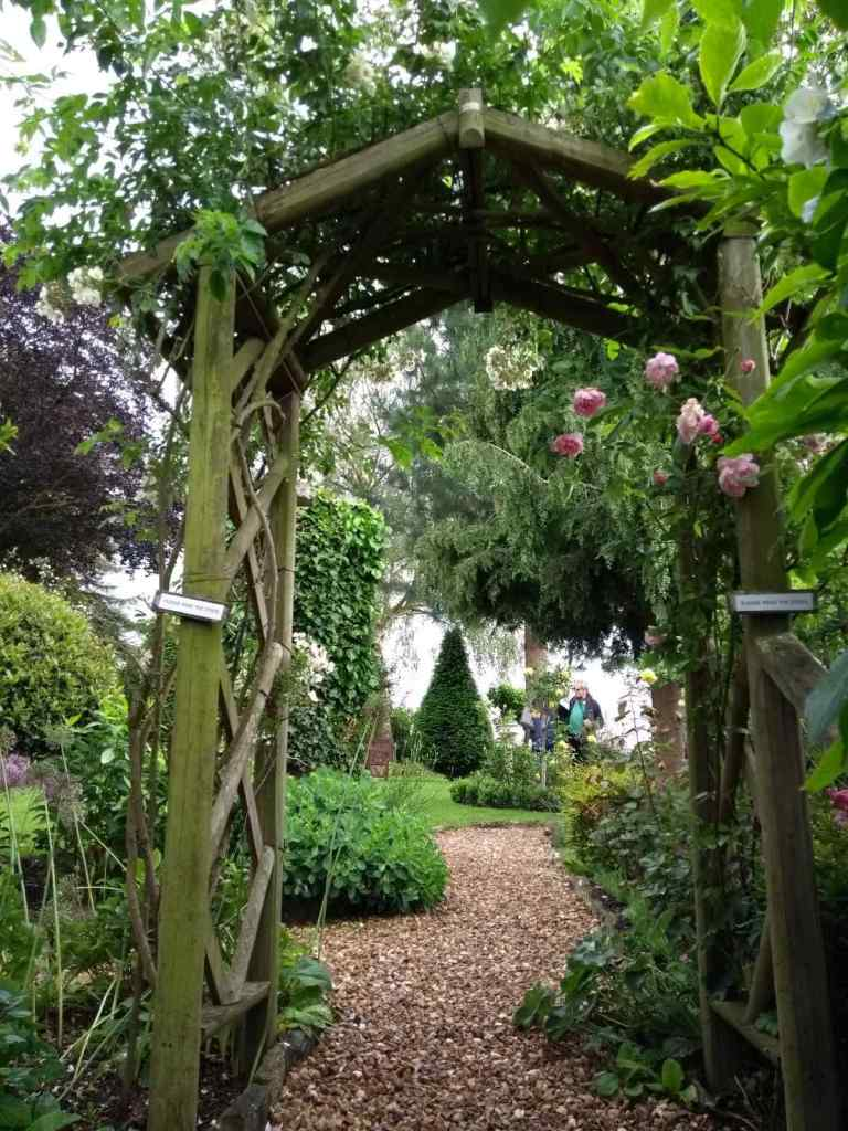 Wooden arch with roses, lawn and topiary in the background