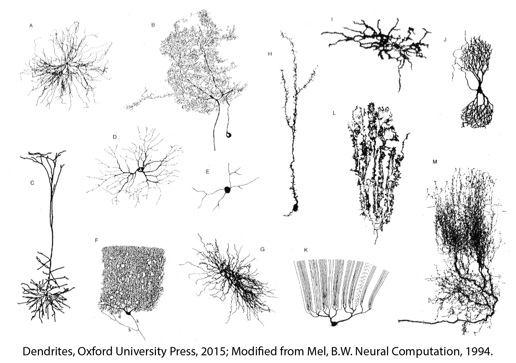 Cellular Diversity In The Hippocampus