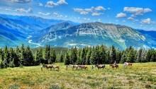 Mills Wilderness Adventures - Augusta Montana