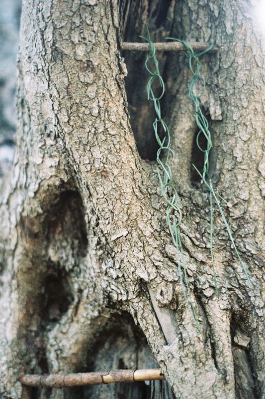 Chain of pine needles, The Glen, Cape Town, 2011