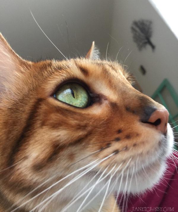 Quincy the Cat