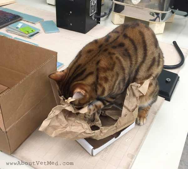 Quincy and the Tiny Box - aboutvetmed.com