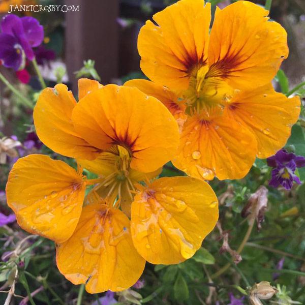 Rainy Flowers - JanetCrosby.com