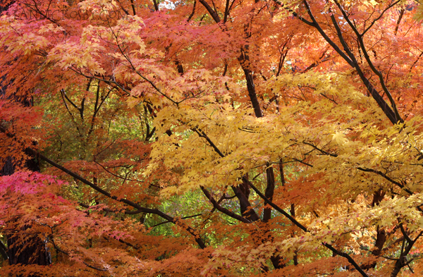 Fall Trees - janetcrosby.com