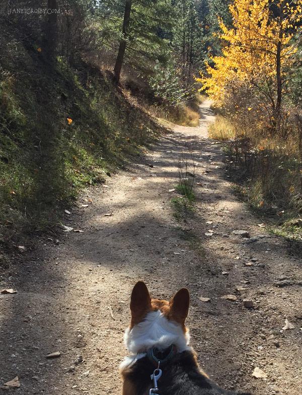 Fall Hike - Avie, the nonstop hiker dog