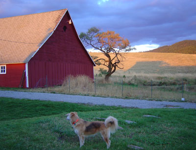 Sophie and Summer Barn - Janet Crosby