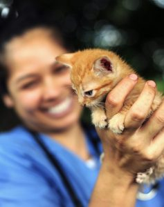 World Vets provides veterinary care for animals that would otherwise have none - photo courtesy of World Vets
