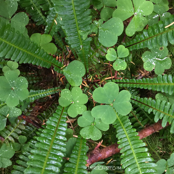 Forest Fern by Janet Crosby
