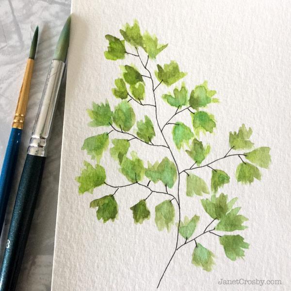 Maidenhair fern watercolor by Janet Crosby