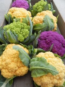 8 cauliflowers of different colors - white, purple, green and gold