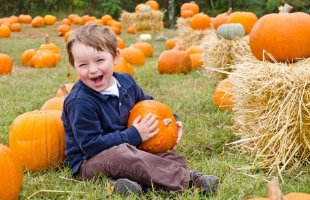 a cute little boy sitting in a pumplin patch holding a pumpkin and laughing