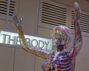 the top part of a biology skeleton