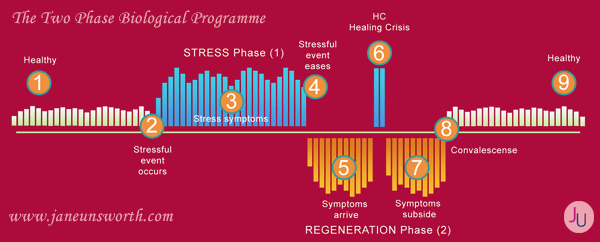 2-phases and the fat gain programme from Hamer