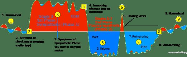 meta-health, meta-medicine, two phases of disease, richard flook, ryke gerdt hamer