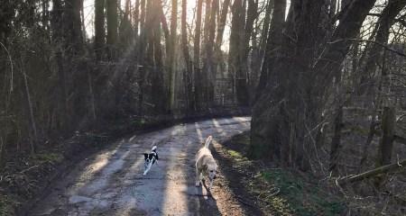 Gewinner oder Verlierer - Hunde - Jan Göritz - Heilpraktiker für Psychotherapie und Psychologischer Berater in Hamburg