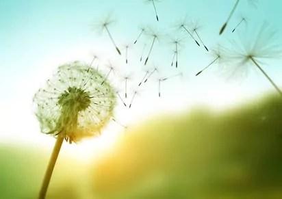 Die fünf Freiheiten nach Virginia Satir - Jan Göritz - Heilpraktiker für Psychotherapie und Psychologischer Berater in Hamburg