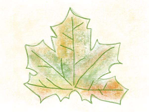 Kastanienblatt zeichnen – 14