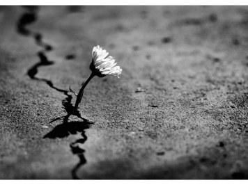 Poetas e seu conhecimento do inconsciente – Lacan no Divã
