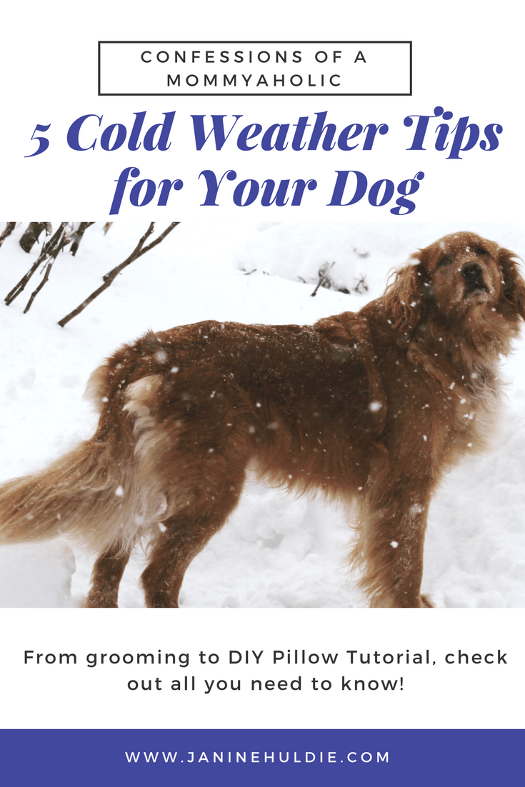 5 Cold Weather Tips for Your Dog