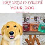 How to Easily Reward Your Dog