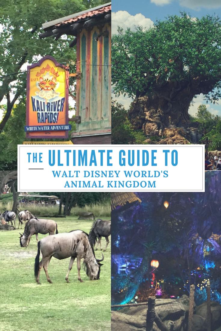 The Ultimate Guide to Walt Disney Worlds Animal Kingdom