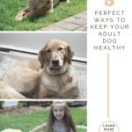 5 Perfect Ways to Help Your Adult Dog Stay Healthy
