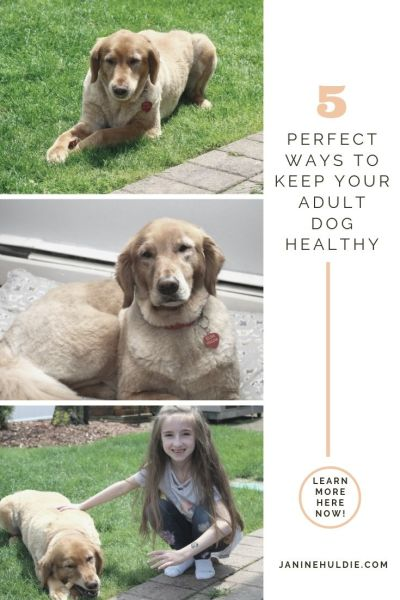 5 Perfect Ways to Keep Your Dog Healthy