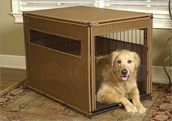 Golden Retriever in Dog Crate