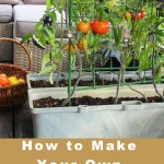 How to Make Your Very Own Victory Garden