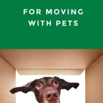 7 Essential Tips For Moving With Pets