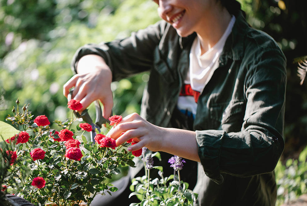 maintain-garden