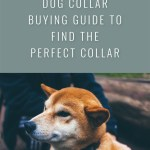 The Ultimate Dog Collar Guide: Choosing the Perfect Collar for Your Dog