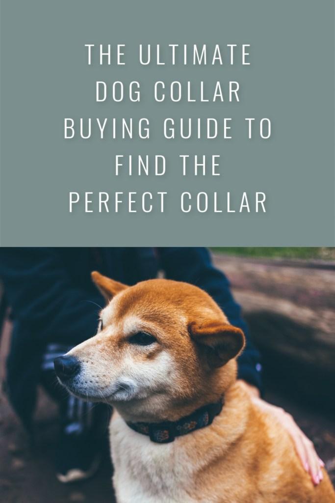 Dog Collar Buying Guide