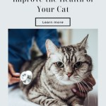 What You Can Do To Improve The Health Of Your Cat