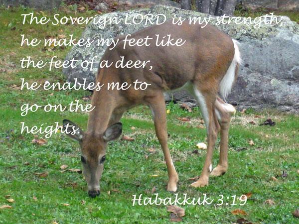 habakkuk-3-19