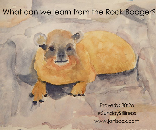 What-can-we-learn-from-the-rock-badger
