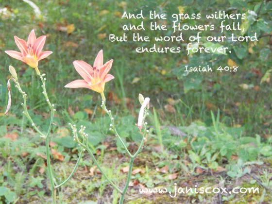 Isaiah-40-8